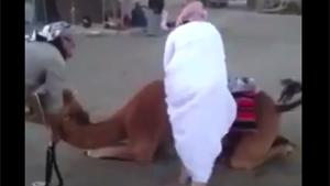 Camel Mount Fail