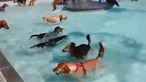 Waterpark For Dogs