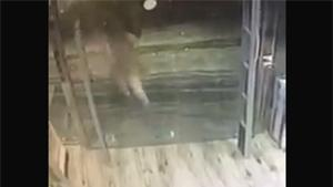 Running Against Glass Door