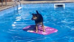 Surfin Dog