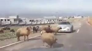 Ram Ramming Car