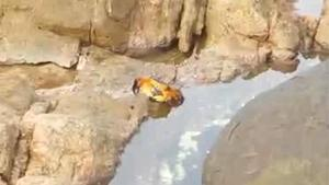 Crab Chilling On A Rock