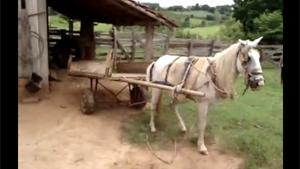 Horse Reverse Parking Carriage