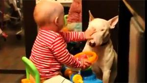Baby Beats Up Dog
