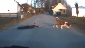 Walking The Boss