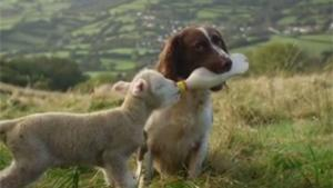 Dog Feeding Lamb