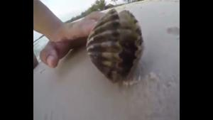 Surprise In Clam Shell