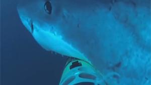 Shark Attacks Underwater Camera