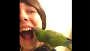 Parrot Pulls Tooth