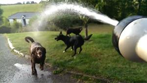 Dogs Having Fun With The Water Hose