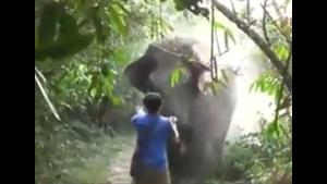 Elephant Takes A Run At Guy