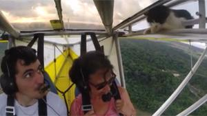 Cat Makes An Unsuspected Flight