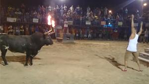 Bull With Flaming Horns Vs Idiot