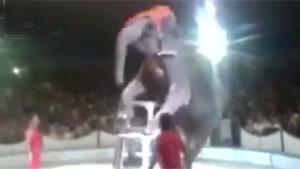 Elephant Trick Goes Wrong