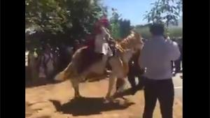 Weddding Horse Throws Groom Off