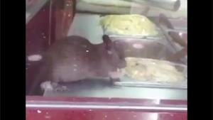 Rat In Restaurant