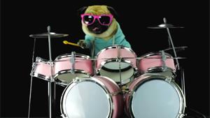 Drumming Dog
