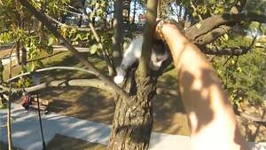 Rescueing Kittens From Tree
