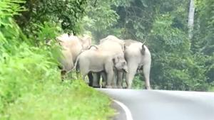 Elephant Herd Attacks Biker
