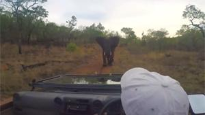 Elephant Chases Down Film Crew