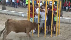 Bull Enters Cage