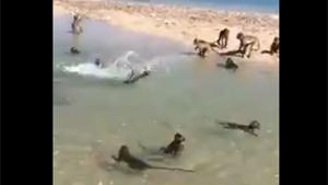 Monkeys Chillin On The Beach