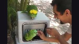 Fun With Parrots