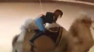 Ripping Pants On Camel Ride