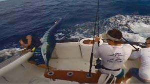 Fisherman Almost Impaled by Huge Marlin