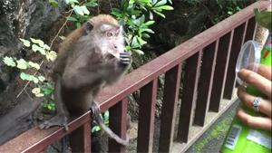 Sneaky Monkey Mom Steals Chips
