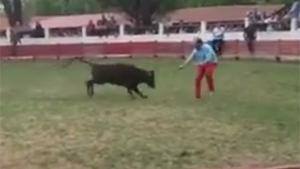 Baby Bull Takes Out Dumbfuck