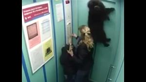 Dog Trapped In Lift Doors