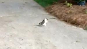 Squirrel Walking On His Hands