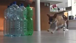 Puppy Bowling