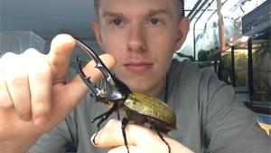 Largest Beetle In The World