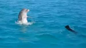 Dolphin Playing With Dog
