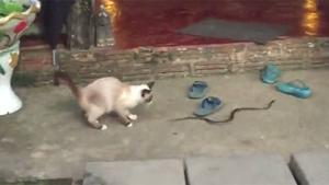 Cat Plays With Snake In Thailand