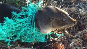 Baby Seal Rescued From Fishing Net