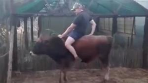 Riding A Young Bull Fail