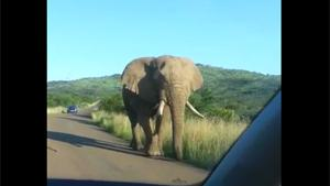 Elephant Comes A Bit Too Close