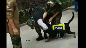 Police Dog Attacks Trainer