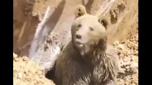 Bear Rescued From Collapsed Cave