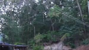 Tree Falls Down On Shed
