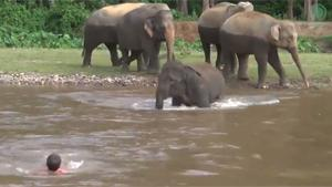 Elephant Rescues Caretaker