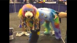 Colorful Dog Show