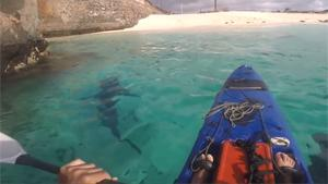 Kayaking With Sharks