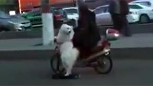 Riding The Dog In China
