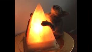 Kitten Worshiping Mystic Lamp