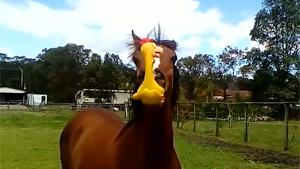 Horse Has Fun With Squawkin Chicken