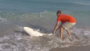 Rescuing Beached Shark